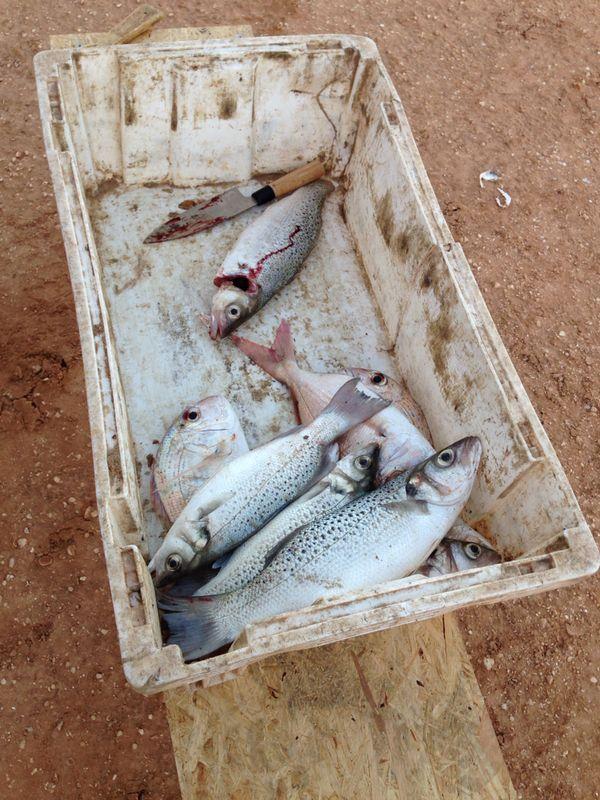 Fisch für 2 EUR